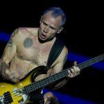 """Flea wspomina lekcje gry na basie z gorylicą Koko. """"Była zdolna"""""""